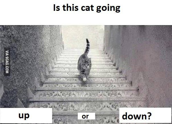 is-this-cat-going-upstairs-or-downstairs_00