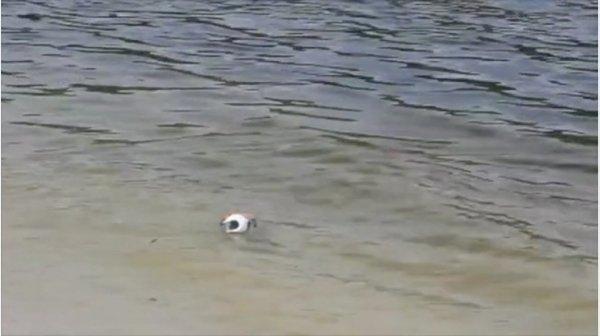 ▲它有防水設計,可以在水上浮起。