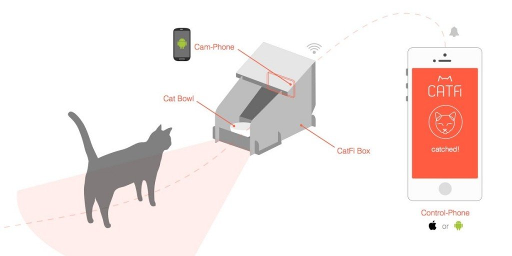 catfi_box_scenario