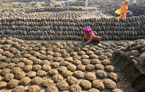 cow-dung-become-the-most-popular-product-in-indian-online-shop_03