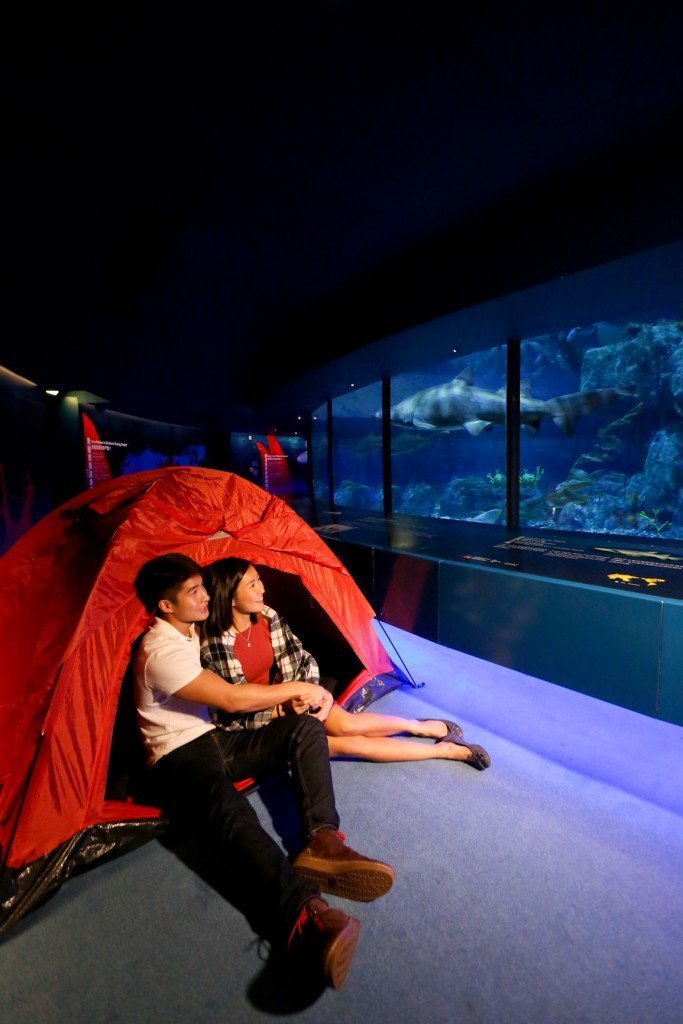 Ocean Park 2016 Valentine's Day Packages - Nighttime in the Ocean's Depths – Special Edition 3