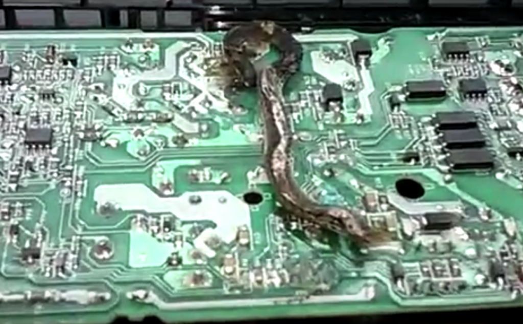 Snake on ps4 -3
