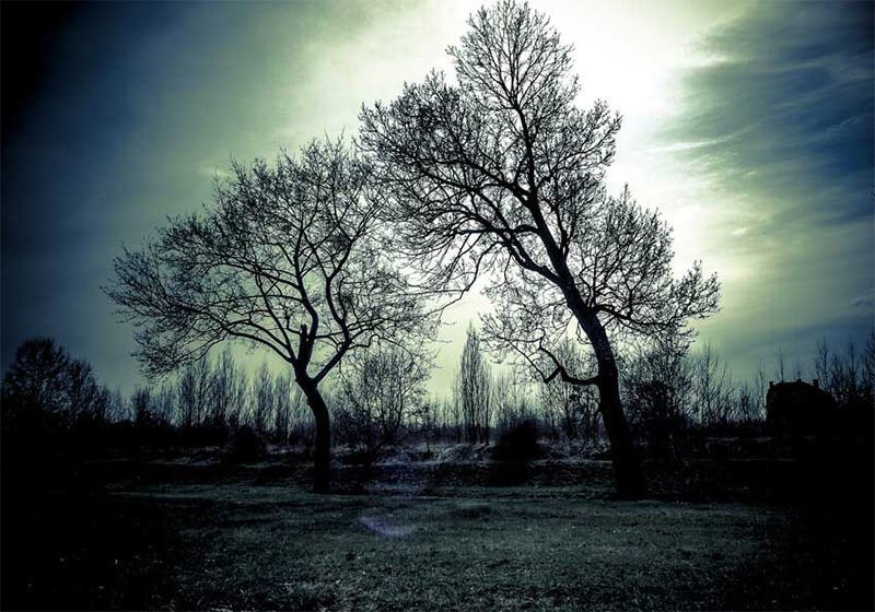 2-Nature-Silhouettes-Trees-Grass