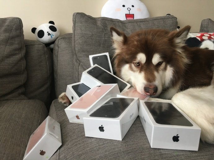 chinese-billiionare-son-bought-8-iphone-7-for-his-dog_01