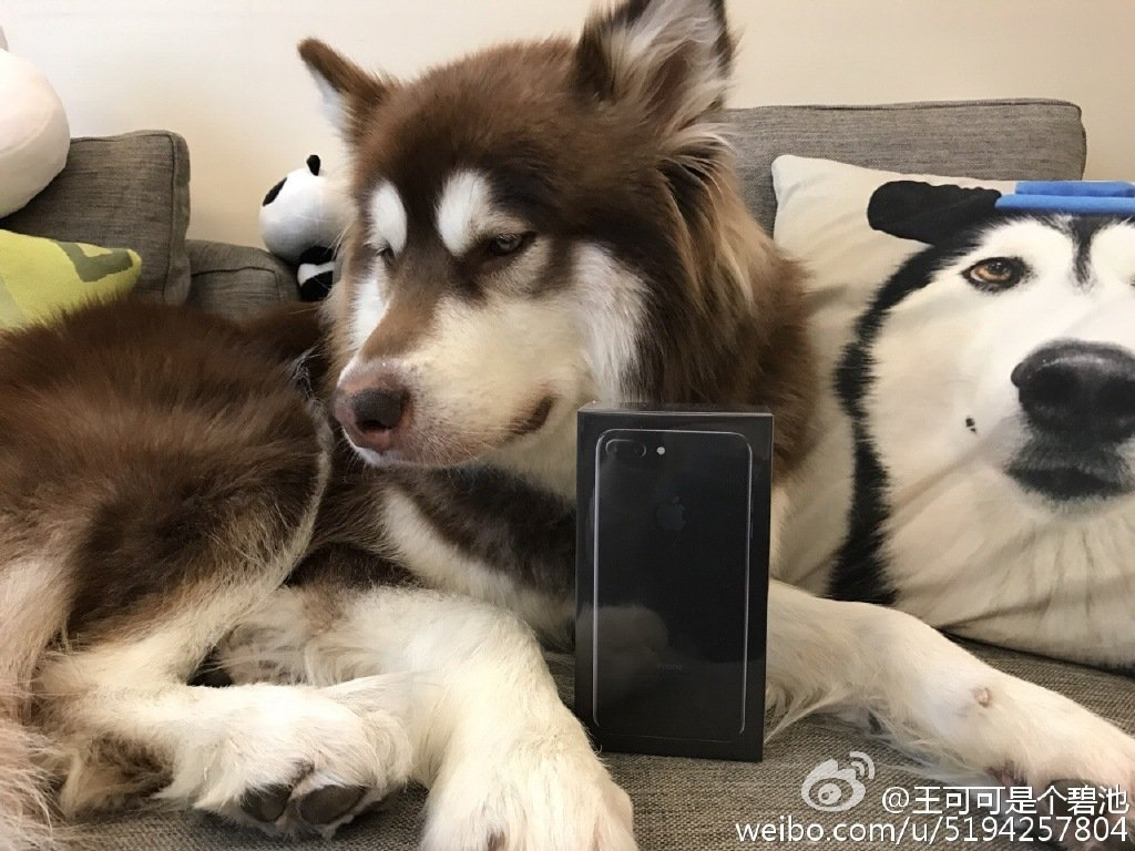 chinese-billiionare-son-bought-8-iphone-7-for-his-dog_02
